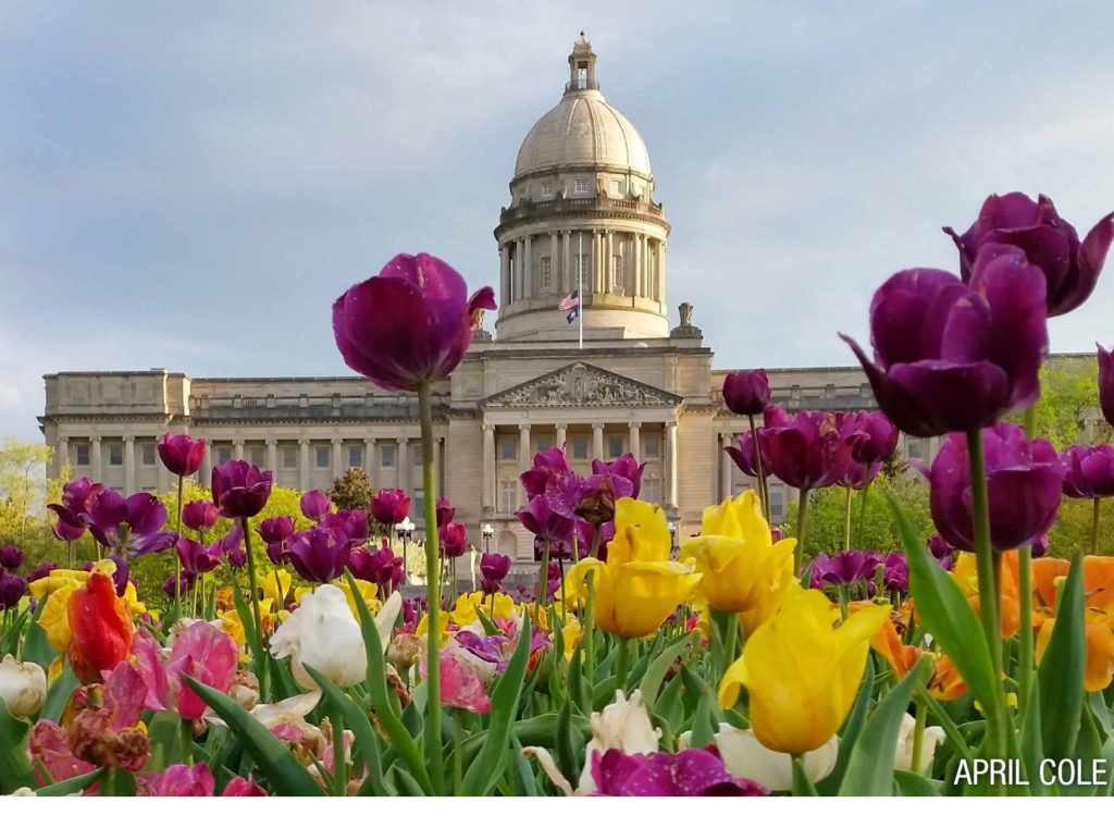 Photo of state capitol with tulips